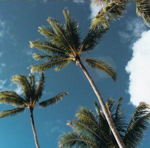 palm tree removal oahu
