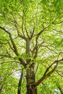 tree in honolulu