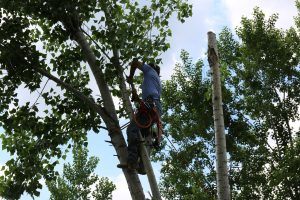 tree cutting service in honolulu oahu