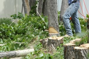 cutting down dead trees from your yard
